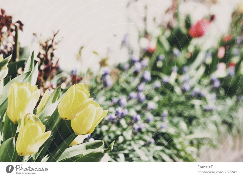 spring flowers Nature Plant Spring Beautiful weather Flower Grass Tulip Leaf Blossom Garden Park Blossoming Fragrance Illuminate Dream Growth Exotic Fresh