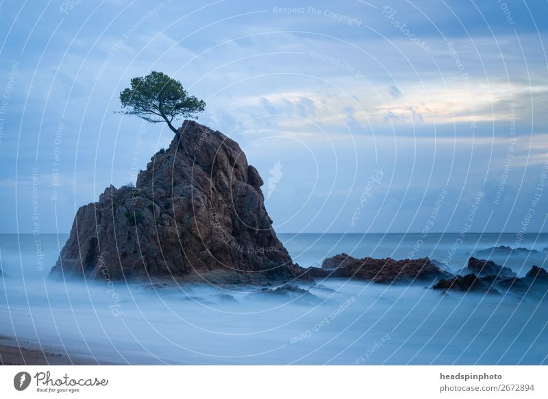 Long-term exposure of a tree on a rock in the sea Vacation & Travel Tourism Trip Adventure Freedom Beach Ocean Island Waves Environment Nature Landscape