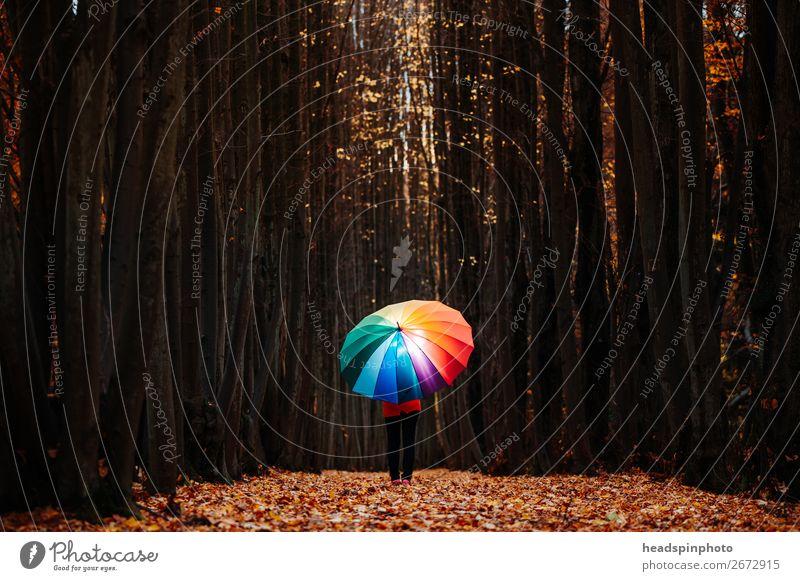 glowing rainbow umbrella in the dark autumn forest Feminine 1 Human being Landscape Autumn Tree Leaf Forest Hiking Brown Yellow Gold Joy Happy Umbrella