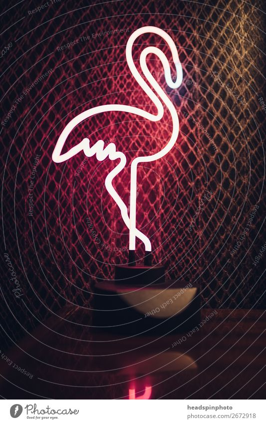 Pink neon lamp in the shape of a flamingo against a dark background Lifestyle Night life Lounge Animal Bird Flamingo 1 Joy Moody Vacation & Travel