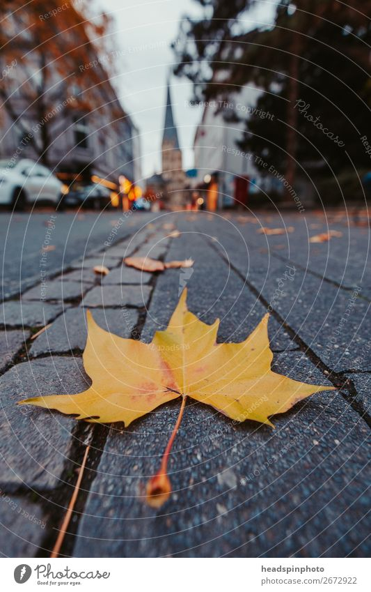 Yellow autumn leaf on the street points to Bonn Cathedral Nature Autumn Leaf Germany Street Brown Town Bonn minster Maple tree Maple leaf American Sycamore