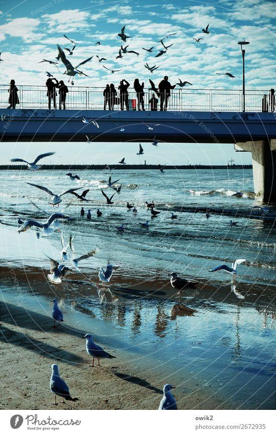 Kolobrzeg, pier Sky Clouds Horizon Waves Coast Baltic Sea Sea bridge Seagull Flock Observe Movement To feed Feeding Many Wild Blue Colour photo Exterior shot