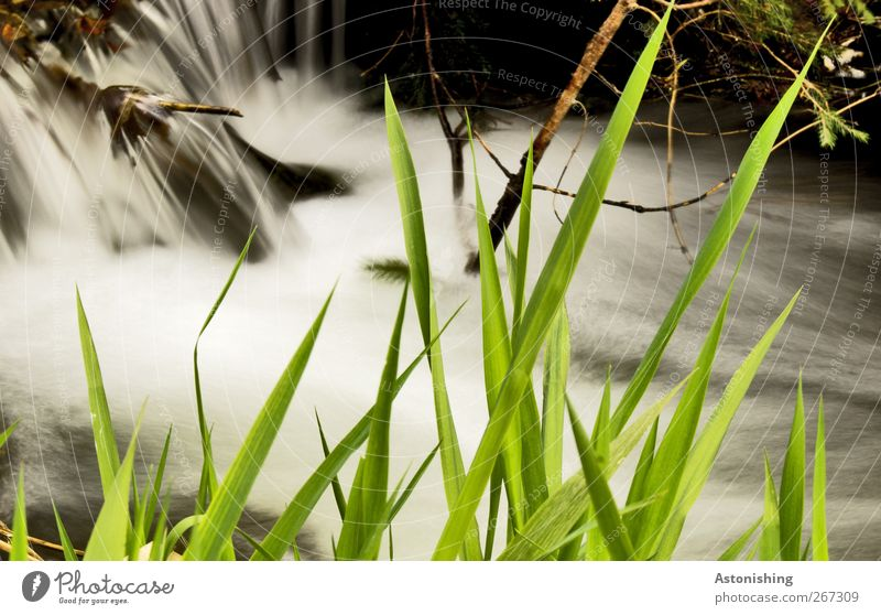 jagged Environment Nature Landscape Plant Water Spring Weather Grass Bushes Moss Meadow River bank Waterfall Wet Speed Green Black White Branch Flow Brook Twig
