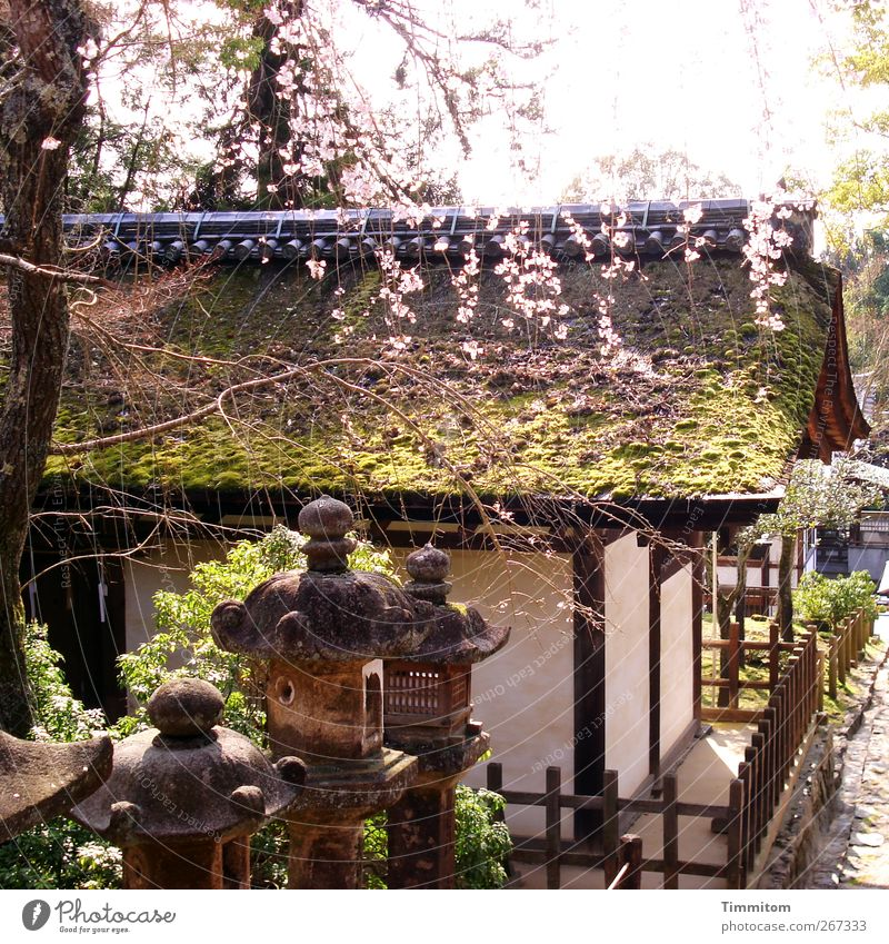 Karl is dreaming. Vacation & Travel Architecture Nature Plant Spring Tree Japan Roof Stone Wood Esthetic Brown Green White Religion and faith Calm 2010 Hanami