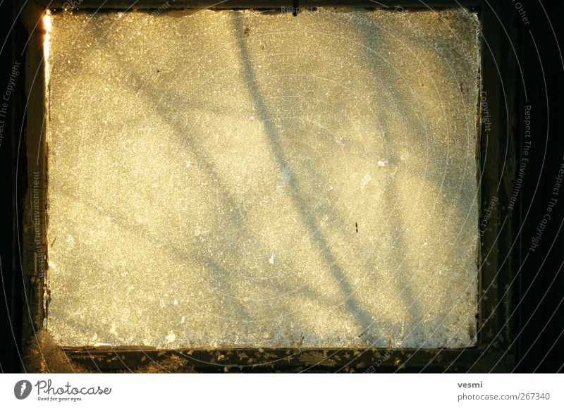 frost window Glass Cold Brown Yellow Shadow Ice Frost Square Abstract Cooling Sunlight Background picture Branch Colour photo Subdued colour Deserted