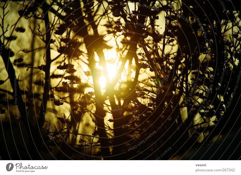 Nature Tree Sun Summer Winter Environment Yellow Dark Autumn Warmth Spring Park Brown Bushes Romance Branch