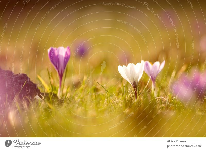 Nature Green White Plant Flower Meadow Grass Spring Blossom Park Stand Growth Beautiful weather Beginning Blossoming Violet
