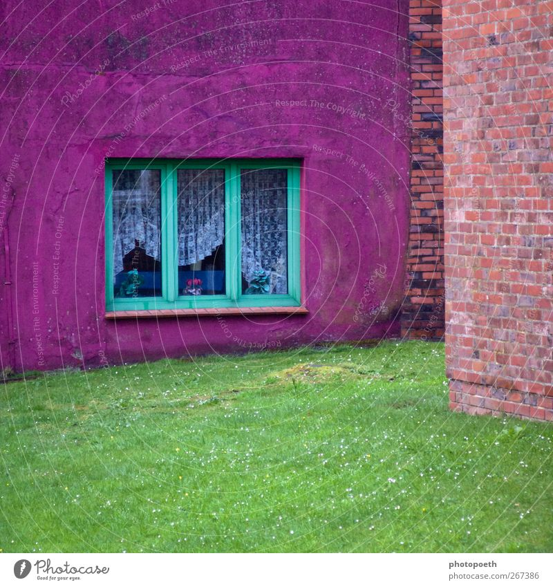 colour corner House (Residential Structure) Garden Window Stone Multicoloured Green Violet Pink Flower vase Curtain Grass surface Wall (barrier) Brick wall