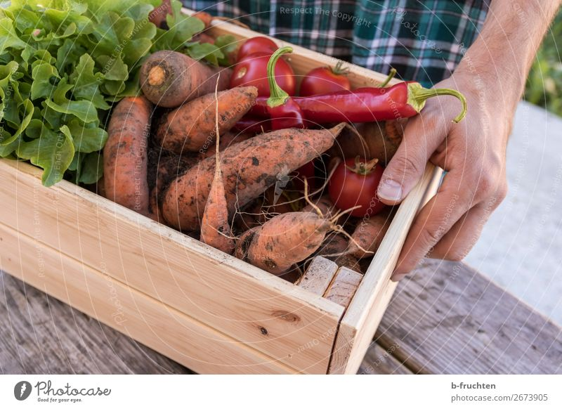 freshly harvested vegetables in a wooden box Food Vegetable Lettuce Salad Organic produce Vegetarian diet Healthy Eating Agriculture Forestry Trade Man Adults