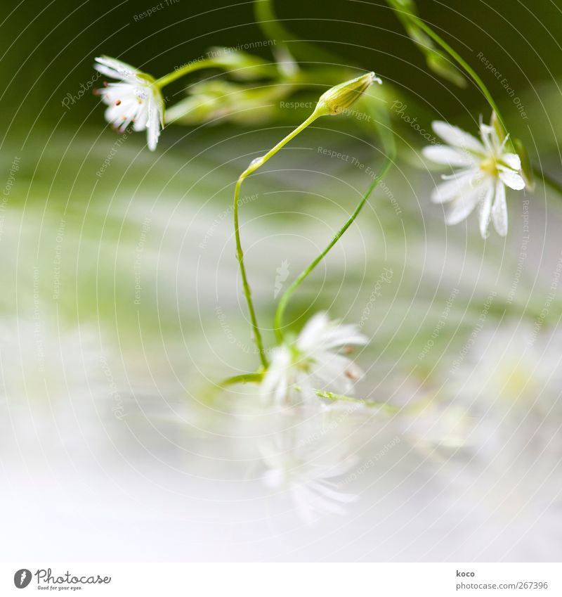 Nature White Green Beautiful Plant Summer Flower Leaf Black Yellow Spring Blossom Elegant Natural Wet Fresh