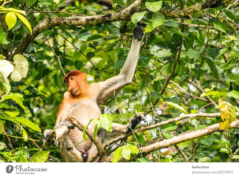 weekend - beautiful hanging out! Vacation & Travel Tourism Trip Adventure Far-off places Freedom Tree Leaf Virgin forest Wild animal Animal face Pelt Monkeys
