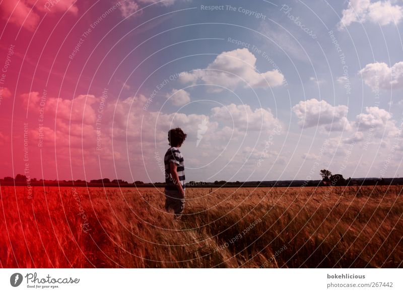 Nature Tree Red Clouds Loneliness Landscape Emotions Happy Field Free Happiness Retro T-shirt Film Individual Vantage point