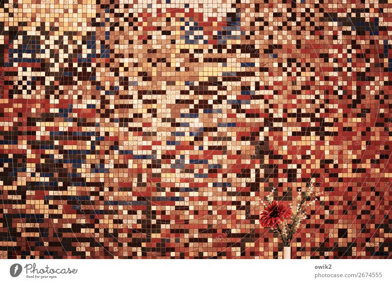 search picture Interior design Decoration Mensa Dining hall Art Work of art Flower Wall (building) Mosaic Retro Crazy Wild Brown Multicoloured Orange Pink Red