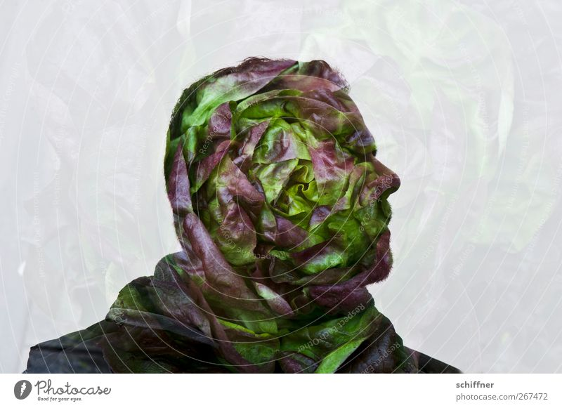 head of lettuce Human being Masculine Man Adults Head Nose 1 Green Nutrition Organic produce Healthy Eating Exceptional Fantastic Whimsical Lettuce Salad