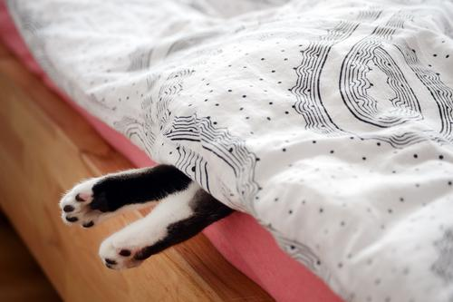 paws Bed Bedroom Feet Animal Pet Cat Paw 1 Wood Observe Lie Sleep Brown Pink Black White Love of animals Exhaustion Relaxation Boredom Living or residing