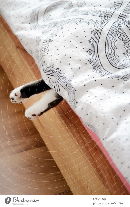 Cat White Animal Black Calm Wood Body Pink Lie Sleep Bed Surprise Hang Pet Comfortable Indifferent