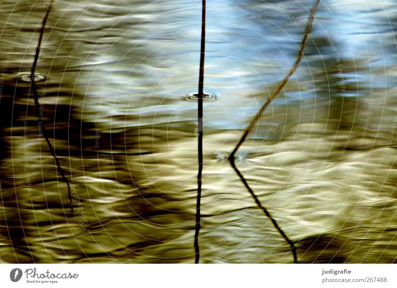 Nature Plant Water Environment Natural Lake Moody Growth Waves Wet Lakeside Delicate Common Reed Blade of grass Pond Surface of water