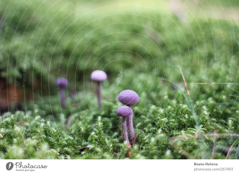 Stand straight! Food Vegetable Nutrition Environment Nature Plant Growth Esthetic Exotic Beautiful Green Violet Mushroom Moss Woodground Edible Cushion