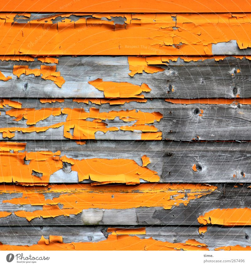 spent Wall (barrier) Wall (building) Facade Wood Old Dirty Hideous Broken Trashy Flexible Disaster Feeble Decline Transience Distress Change Varnish Flake off