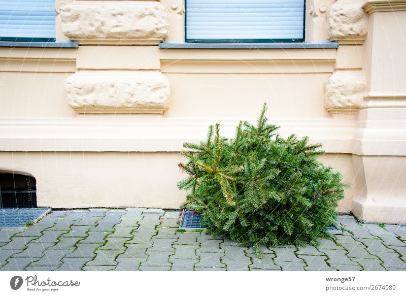 Christmas is through Tree Coniferous trees Christmas tree Facade Window Old Town Gray Green Fir tree Disposed of Dispose of Christmas decoration Street Sidewalk