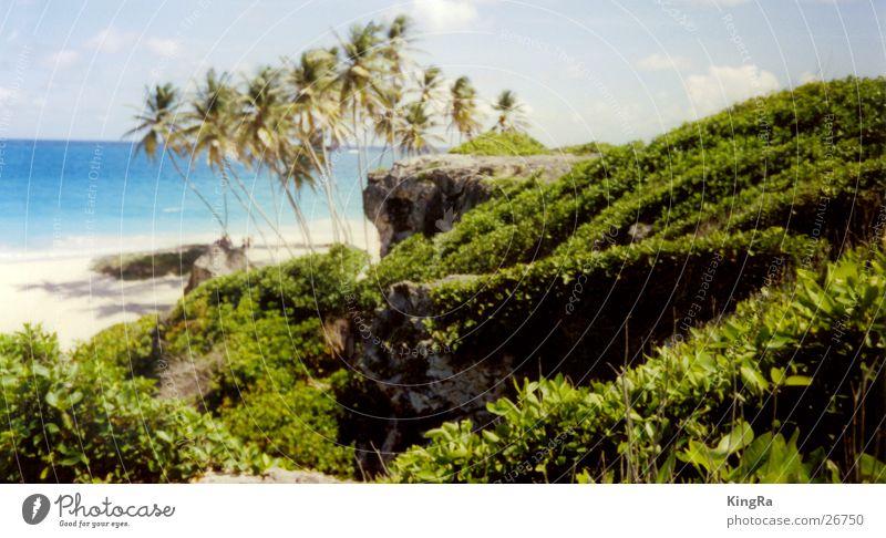 hidden beach Beach Palm tree Green Ocean Turquoise South America Water