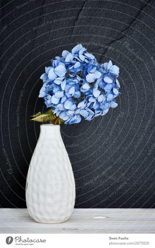 Blue hydrangea in a vase Beautiful Life Decoration Wedding Nature Plant Spring Flower Leaf Blossom Bouquet Love Fresh Soft Green Violet White Hydrangea