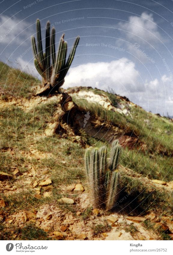 Sky Sun Green Plant Cactus Sparse Stony