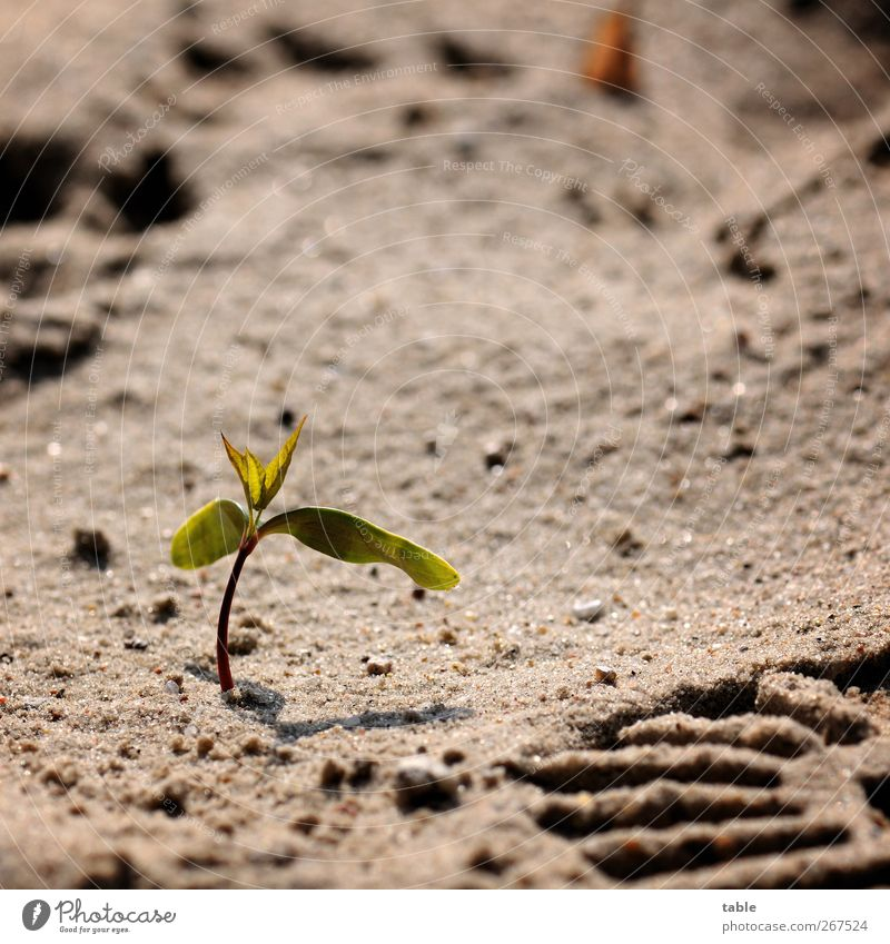 Nature Green Tree Plant Summer Leaf Loneliness Environment Spring Gray Sand Power Beginning Dangerous Growth Change