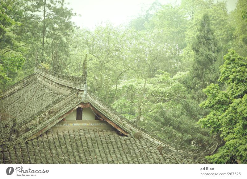 tree house Nature Animal Spring Plant Tree Bushes Forest Hill China Xian Village Old town Deserted Detached house Hut Building Architecture Wall (barrier)