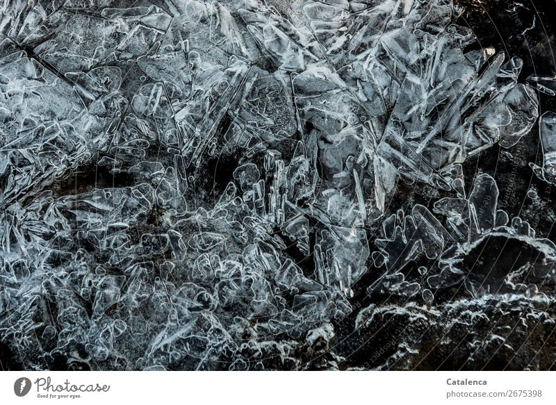 *800* Points and serrations Winter Ice Frost Structures and shapes Ice crystal Cold Moody Design Nature Environment Frozen Colour photo Subdued colour