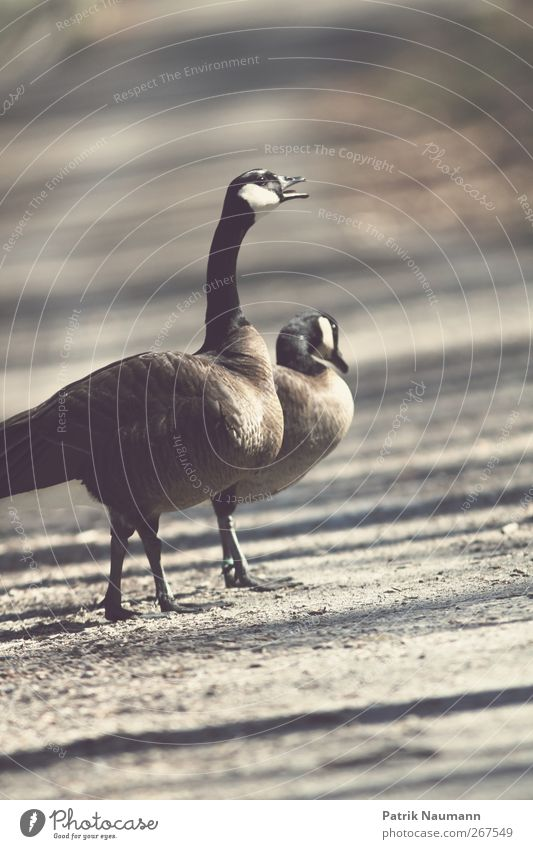 Nature Summer Animal Dark Movement Gray Park Weather Glittering Walking Wet Crazy Wing Threat Cute Communicate
