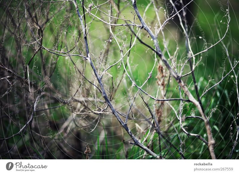 network. Environment Nature Plant Grass Bushes Moss Foliage plant Green Subdued colour Exterior shot Deserted Shallow depth of field