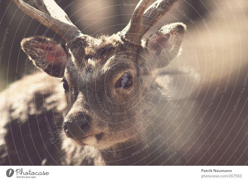 Animal Calm Eyes Movement Freedom Brown Wild animal Happiness Illuminate Cute Soft Curiosity Pelt Protection Friendliness Near
