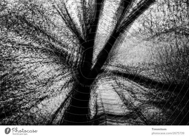 Sky Nature Plant White Tree Winter Black Autumn Environment Emotions Gray Esthetic Bleak Oak tree Leafless