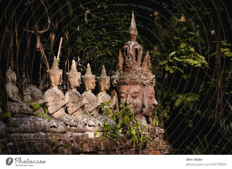 Wat Pha Lat Monastery Tourism Virgin forest Chiangmai Thailand Asia Garden Tourist Attraction Esthetic Buddhism Statue of Buddha Old Ancient states Colour photo