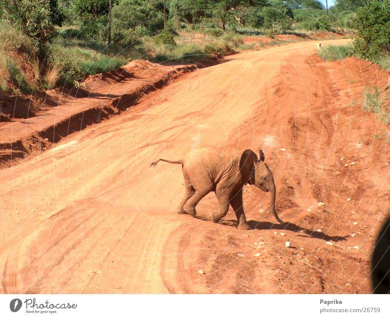 Street Africa Elephant Safari Traverse Kenya