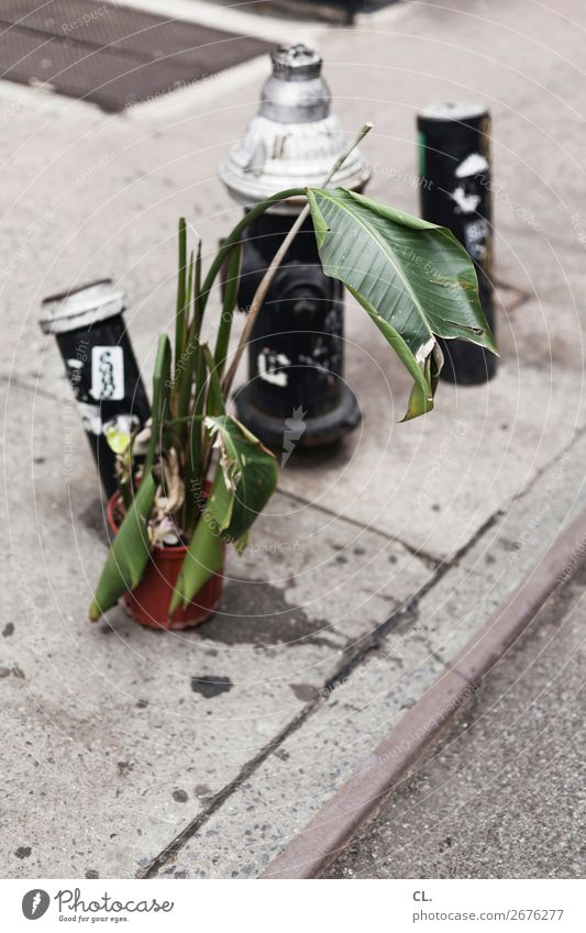 Plant Town Street Lanes & trails Transport USA Asphalt Trash Traffic infrastructure Whimsical New York City Foliage plant Fire hydrant