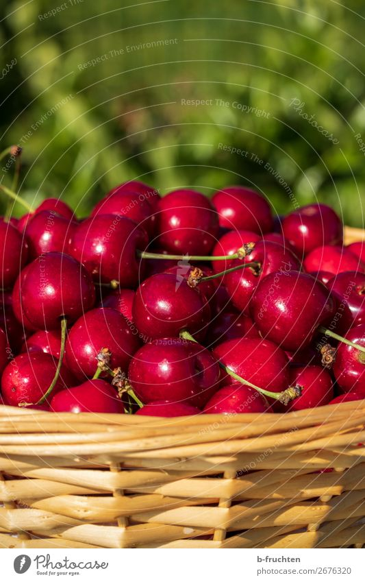 Fresh cherries Food Fruit Organic produce Vegetarian diet Drinking water Healthy Eating Gardening Agriculture Forestry Summer Select Red Cherry Wickerwork