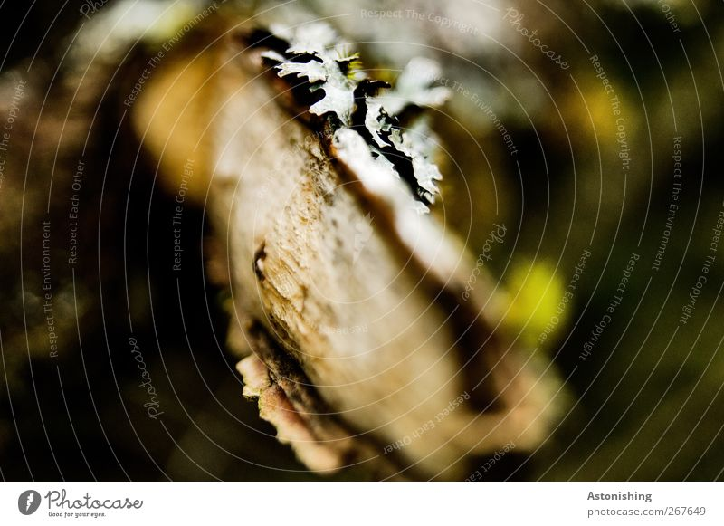 branch Environment Nature Plant Tree Bushes Moss Brown Green Black White Breakage Branch Tree bark Lichen Wood Twig Blur Focal point Colour photo Exterior shot