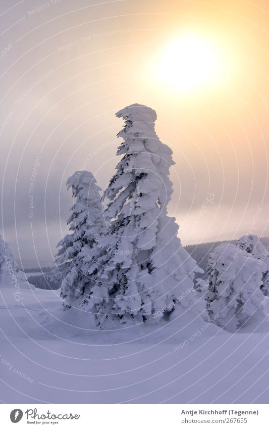 Nature White Tree Sun Winter Environment Landscape Yellow Snow Mountain Wood Snowfall Ice Power Gold Illuminate