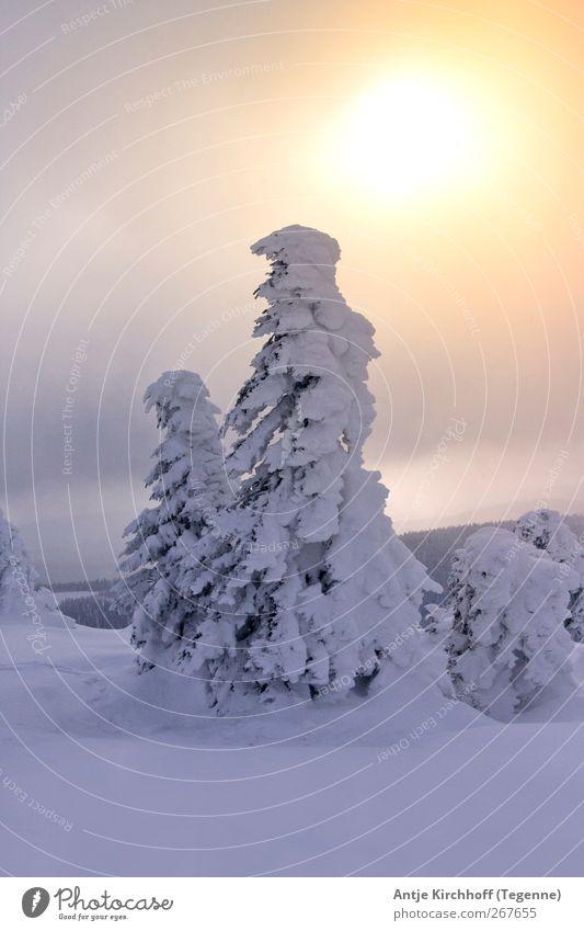 Winterwonderland... Environment Nature Landscape Sun Sunrise Sunset Sunlight Beautiful weather Ice Frost Snow Snowfall Tree Mountain Snowcapped peak Wood