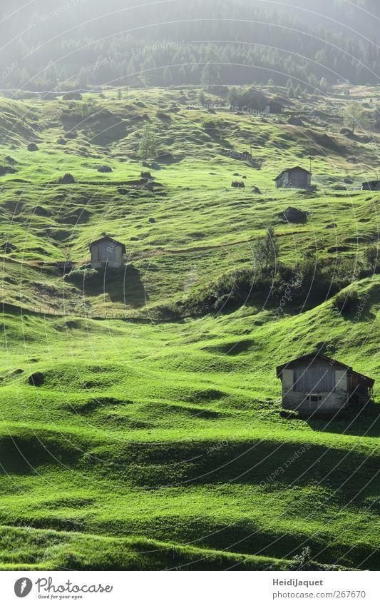 Nature Green Summer Environment Landscape Meadow Mountain Fog Lawn Village Switzerland Serene Hut To enjoy Morning fog
