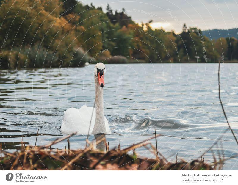 Sky Nature Plant Blue Green Water White Landscape Sun Animal Autumn Environment Natural Lake Orange Bird