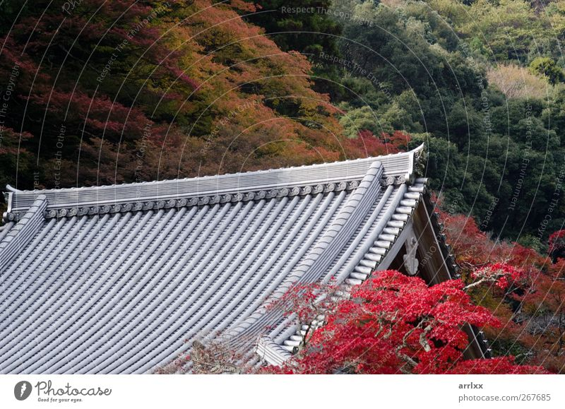 Japanisches Tempeldach / Japanese temple roof in autumn Nature Vacation & Travel Tree Red Leaf Forest Autumn Mountain Architecture Religion and faith Garden