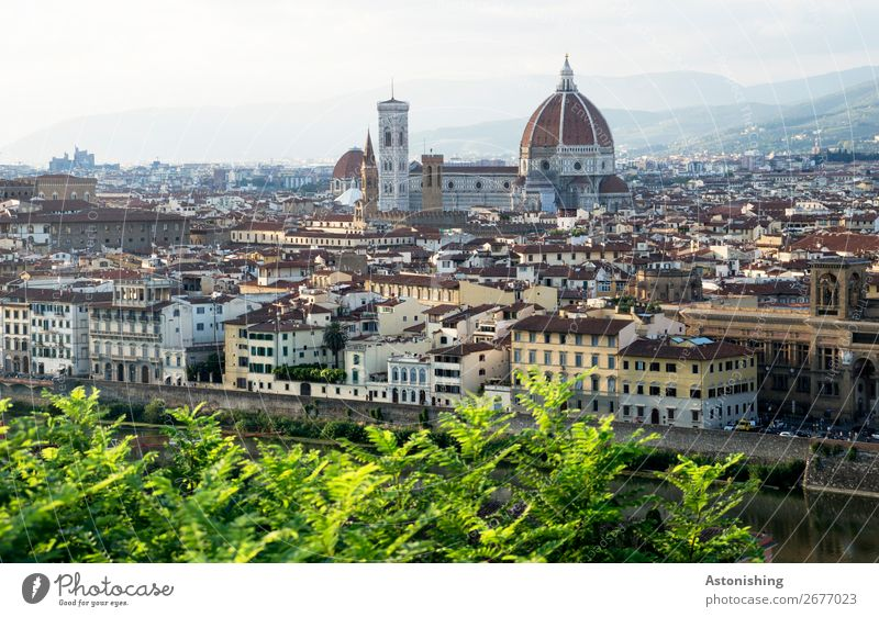 cathedral Environment Nature Landscape Horizon Summer Weather Beautiful weather Tree Leaf Hill Mountain Florence Italy Town Downtown Old town
