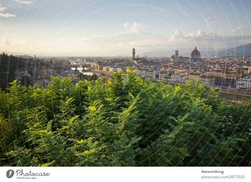 View of Florence Environment Nature Landscape Sky Horizon Sunrise Sunset Plant Tree Leaf River Arno Italy Town Downtown Old town House (Residential Structure)