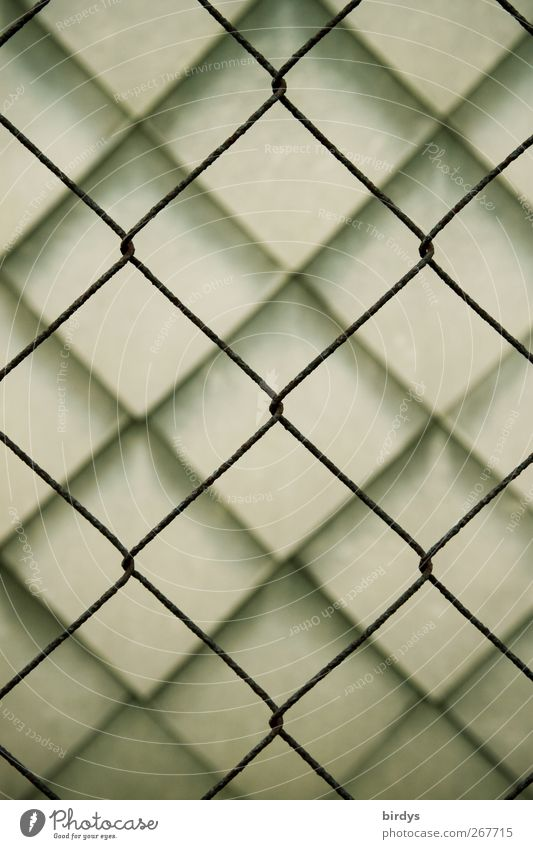 Shape kinship 1 Wall (barrier) Wall (building) Wall cladding Esthetic Exceptional Safety Protection Arrangement Symmetry Town Wire netting fence Connection
