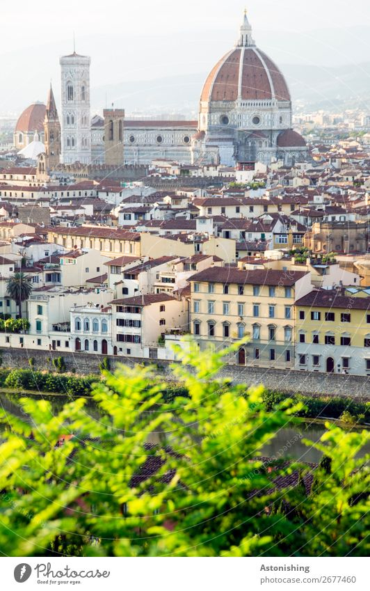 Cathedral of Florence Environment Nature Landscape Sky Horizon Plant Leaf Hill Italy Town Downtown Old town House (Residential Structure) Church Dome Tower