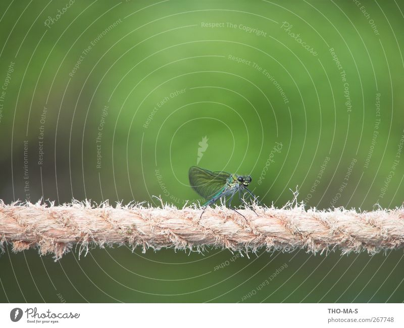 tightrope walker Dance Dance event Dancer Ballet Environment Nature Animal Air River bank Bog Marsh Dragonfly wings 1 Rope Line Elegant Blue Green Spring fever