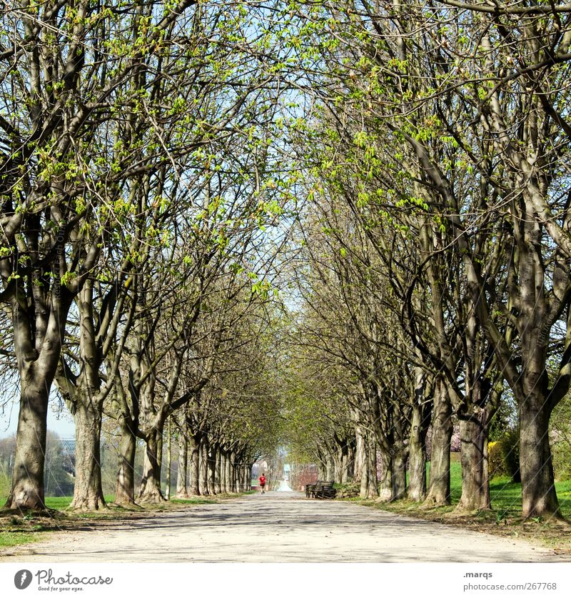 avenue Nature Landscape Elements Spring Climate Climate change Beautiful weather Tree Park Fresh Perspective Symmetry Lanes & trails Tunnel vision Footpath